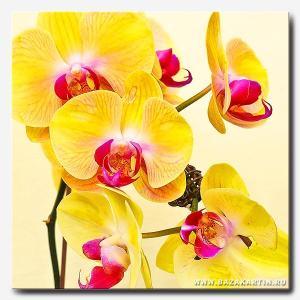 jeltie-orhidei-kvadr-min