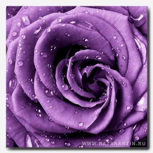 roza-filet-kvadr-min